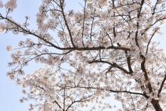 2019_seoul_Seoraksan_National_Park_7033