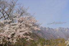2019_seoul_Seoraksan_National_Park_7116